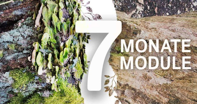 Kompakt: 7 Monate – 7 Module
