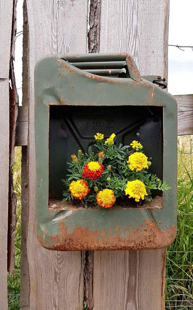 Upycycling Idee | Benzinkanister und zeitgleich Blumentopf