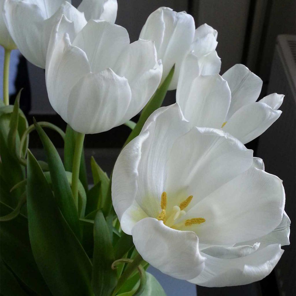 Ausgangsfoto weiße Blüte