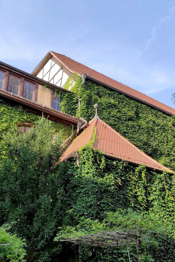Neue Residenz Halle (Saale) | Begrünter Innenhof